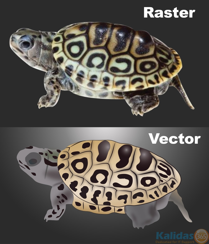 convert vector pdf to raster